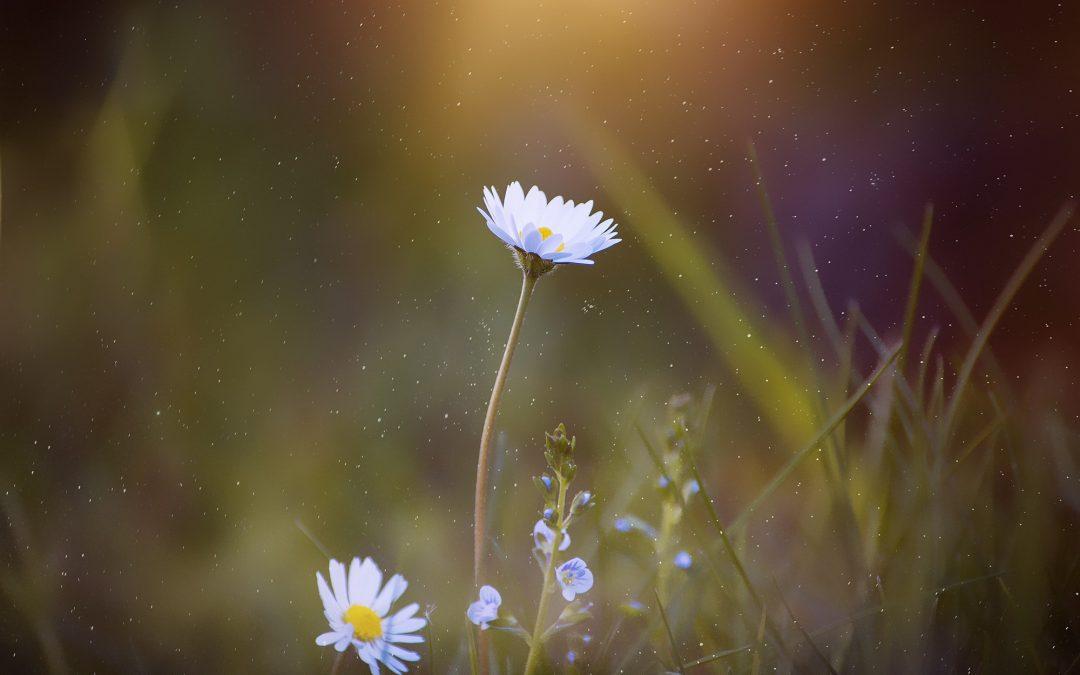 Si en este momento no te sientes feliz y en paz, quizás es tu alma recordándote que es tiempo de crecer…